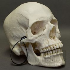 Human Skull, gift idea, for sale, tthu, thats the hook up « That's ...