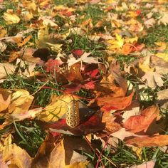 Bienvenido Otoño! Gracias por todos tus mágicos colores.  Welcome Autumn Thanks for al your magic colors.  #autumn #floweroflife #flordelavida #yogajewelry #sacredgeometry #buddhism #buddha #buda #budismo #talentovenezolano #disenovenezolano #chic #chicbohemian #fashion #musthave #instafashion #glam #geometriasagrada #quebec #canada