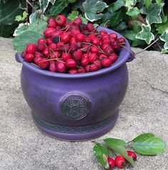 Dried English Hawthorn Berries:- Hawthorn is a feminine wood and the tree has many associations with love, marriage, spring, fertility and childbirth. But Hawthorn has a darker face too, She stands at.