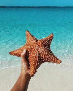 Follow for tropical inspiration #tropical #beach #summer #starfish