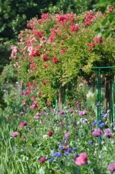 Monet's garden. Giverny.