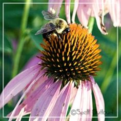 All things bees.. Printables and bee lesson plans