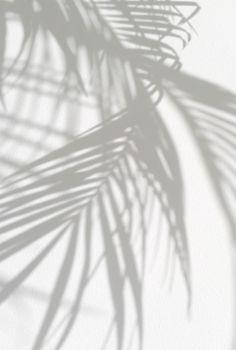 Shadows of paradise.