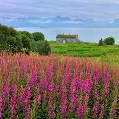 Vesterålen, Lofoten, Northern Norway #landscape #nature #beauty #northern norway