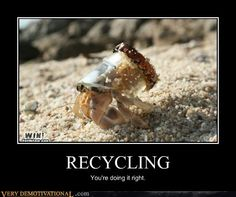 hermit crab is making his home out of recycled materials.