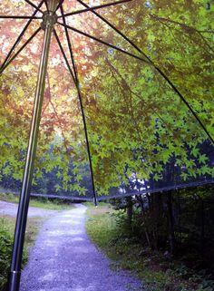 "Komorebi ""light through the trees"" umbrella"