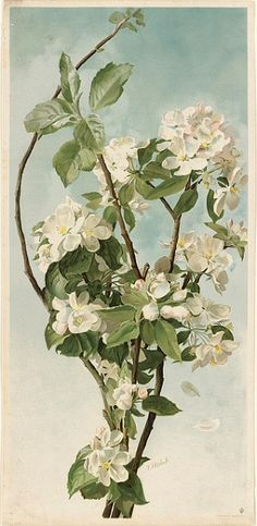 Thaddeus Welch,  Apple Blossoms  1886