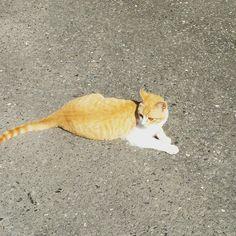 #ねこ #ねこ部 #ねこら部 #ねこもふ団 #ネコ #猫 #にゃんこ by roroxi
