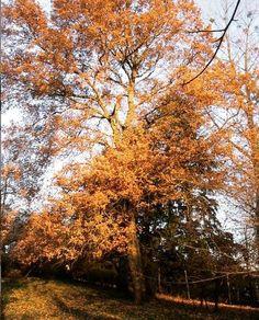 Maître des lieux, il se situe dans le bas du terrain Country Roads, Plants, Natural Garden, Daffodil, Garden Art, Stockings, Home, Plant