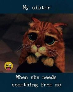 Image in Funny 👽😂😂 collection by Saraii Gonzalez Funny Animal Pictures Of The Day - 22 Pics 108 Sister Quotes And Funny Sayings With Images 32 Of Today's Freshest Pics And Memes So True GIF Gallery II Sister Quotes Funny, Brother Sister Quotes, Funny Qoutes, Funny Relationship Quotes, Funny Relatable Memes, Funny Sayings, Quotes On Sisters Love, Sister Quotes And Sayings, Life Quotes