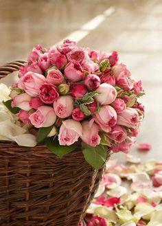 Ana Rosa ♥✫✫❤️ *•. ❁.•*❥●♆● ❁ ڿڰۣ❁ La-la-la Bonne vie ♡❃∘✤ ॐ♥⭐▾๑ ♡༺✿ ♡·✳︎·❀‿ ❀♥❃ ~*~ TH May 26, 2016 ✨вℓυє мσση ✤ॐ ✧⚜✧ ❦♥⭐♢∘❃♦♡❊ ~*~ Have a Nice Day ❊ღ༺ ✿♡♥♫~*~ ♪ ♥❁●♆●✫✫ ஜℓvஜ