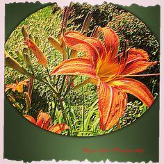 Tanya Lynn Photography  Beautiful Garden Print $125.00