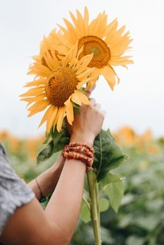 Photography Ideas At Home, Photography Pics, Summer Vibes, Summer Fun, Yellow Aesthetic Pastel, Sunflower Photography, Sunflower Wallpaper, Senior Picture Outfits, Sunflower Fields