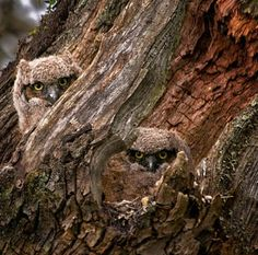 Found on mountainvagabond.tumblr.com via Tumblr---can they see us??