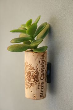 Succulent Cork Magnet,  Sierra Jade. $3.00, via Etsy. This is easy- no need to buy- take last nights cork, hollow out, put a little dirt in and add succulent cutting- Viola!