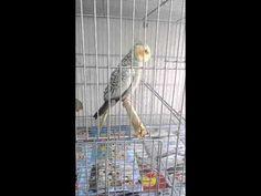 YouTube Parrot, Birds, Youtube, Animals, Good Morning Images, Parrot Bird, Animaux, Bird, Parrots