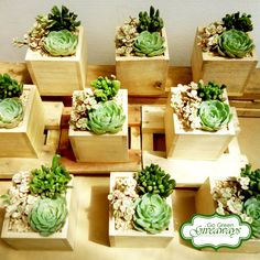 Succulents Arrangement Wedding Souvenirs - Manila Wedding