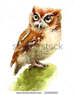 Watercolor Owl Bird Hand Painted Illustration on white background