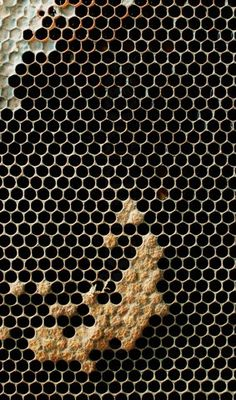 Natural texture of honey comb with wax