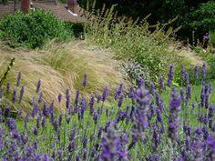 Grasses + lavender