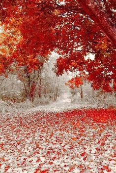 Transição entre o Inverno e Outono, Primeira queda de neve em Minnesota ainda aparecendo o vermelho das folhagens de outono.