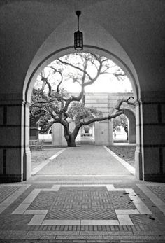 New Study: Students Learn Better in Classrooms with Views of Trees | The DirtA Tree Campus, Rice University / Carol Ciarniello