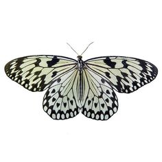 Butterfly photo spring  black and white wings botanical by bomobob, $30.00