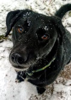 Shasta love's the snow