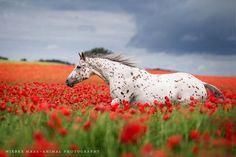 Fascinée par les chevaux, la photographe allemande Wiebke Haas a décidé de rendre hommage à ces animaux majestueux avec une série de photographies env