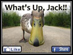 Quack!!