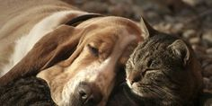 Stop Killing Dogs & Cats For Their Meat in the USA http://www.thepetitionsite.com/takeaction/711/635/915/