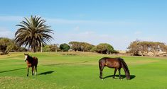Wild horses on Oranjemund Golf course Brown Hyena, Homing Pigeons, German Police, Ostriches, Diamond Mines, Best Kept Secret, Wild Horses, Great View, Tourism