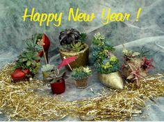 Wishing you a succulent New Year! :-)