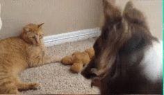 Oye gato del c... Dame mi peluche conchale