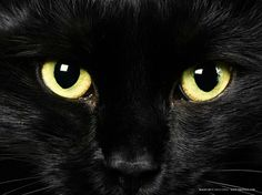 Our black cat Soot looks like this...especially when he gets up close face to face...lol