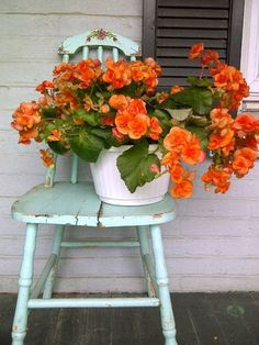double begonia ~ bloom looks almost like a large rose; available in many colors, but my faves are yellow and the above neon(ish) orange; blooms continuously and beautifully in partial shade until heavy frost; my go-to front-porch flower May Flowers, Beautiful Flowers, Bright Flowers, Orange Power, Orange You Glad, Garden Chairs, April Showers, Garden Styles, Container Gardening