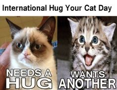 Make sure to celebrate International Hug Your Cat Day!
