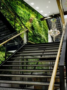 A green wall can contain over a thousand plants, all of which filter air and in addition create energy-rich oxygen.