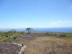 Join an inspiring project helping with conservation volunteering in the Galapagos. Spend 1 - 3 weeks preserving fauna and flora on a stunning island. Galapagos Islands, Gap Year, Conservation, Flora, Happiness, Mountains, Random, Board, Check