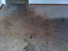 Amazing before & after carpet cleaning pictures by CE Carpet Care.