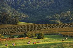 A tour of Va. wine country takes you to bucolic farms and rustic diners, and, oh yes, the vineyards, too.