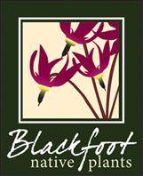 Blackfoot Native Plants   Montana Native Plant Nursery