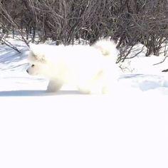 First Snow#dogs #kitty #lovecats #kittens #animals #ねこ #animal #kitten #cat #pets #ilovemycat #love #catoftheday #happynewyear #adorable #catlover #pet #meow #猫 #cute #pinterest