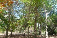 Fetherston Gardens Urban Park, Recreational Activities, Woodland Garden, Plant Species, Water Plants, Pathways, Pond, Grass, Wildlife