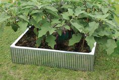 This Hansons Galvanised Raised Garden Bed is ideal for gardens, allotments and patios, allowing you to successfully grow a selection of fruits, vegetables. Raised Flower Beds, Raised Garden Beds, Raised Beds, Back Gardens, Small Gardens, Outdoor Gardens, Garden Planter Boxes, Barrel Planter, Greenhouse Base