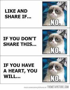 Grumpy Cat I love Grumpy cat! Grumpy Cat makes sense. oh hai LOL Cats! Meme Grumpy Cat, Cat Memes, Funny Memes, Grumpy Kitty, Kitty Kitty, Funny Quotes, Funniest Quotes, Hilarious Jokes, It's Funny