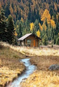 Cabin                                                                                                                                                                                 More