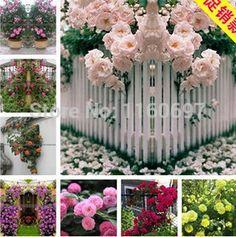 Mixcolor 450 seeds/bag climbing rose seeds sementes de rosa of Flower Seeds semillas For casa e jardim garden home decoration