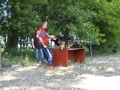Training fuer Diensthunde.mpg - YouTube