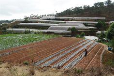 Làm đất chuẩn bị gieo cây mầm